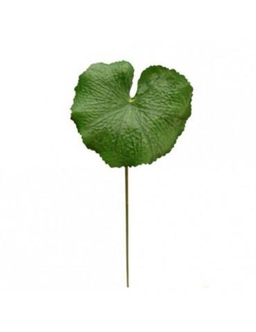 Gėlė Žalias Lotosas, 53cm