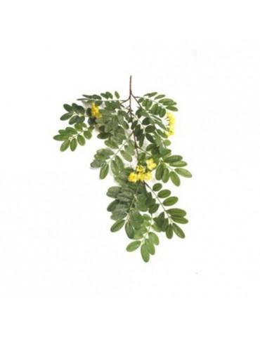 Gėlė Geltona Akacija, 70cm