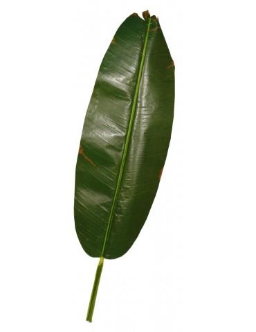 Bananmedžio lapas 160 cm.