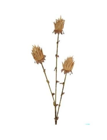 Gėlė rudeninė kalankė 115